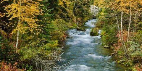 fall-foliage-tour-480x240