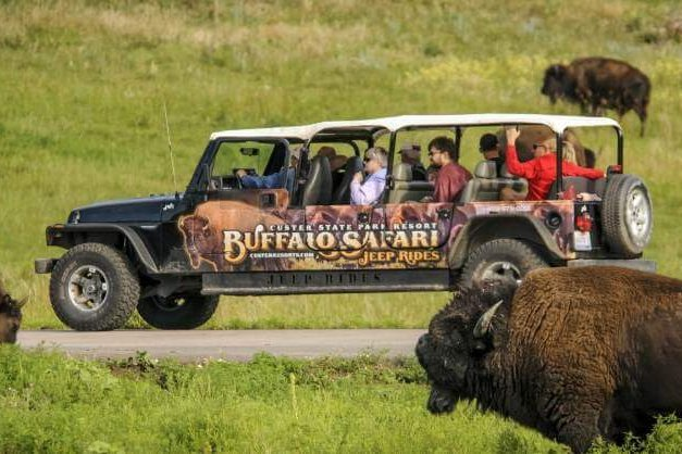 Buffalo Safari